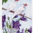 文鳥とキキョウ
