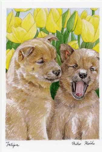 犬とチューリップ